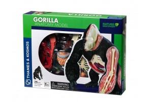 Конструирай анатомичен модел на горила